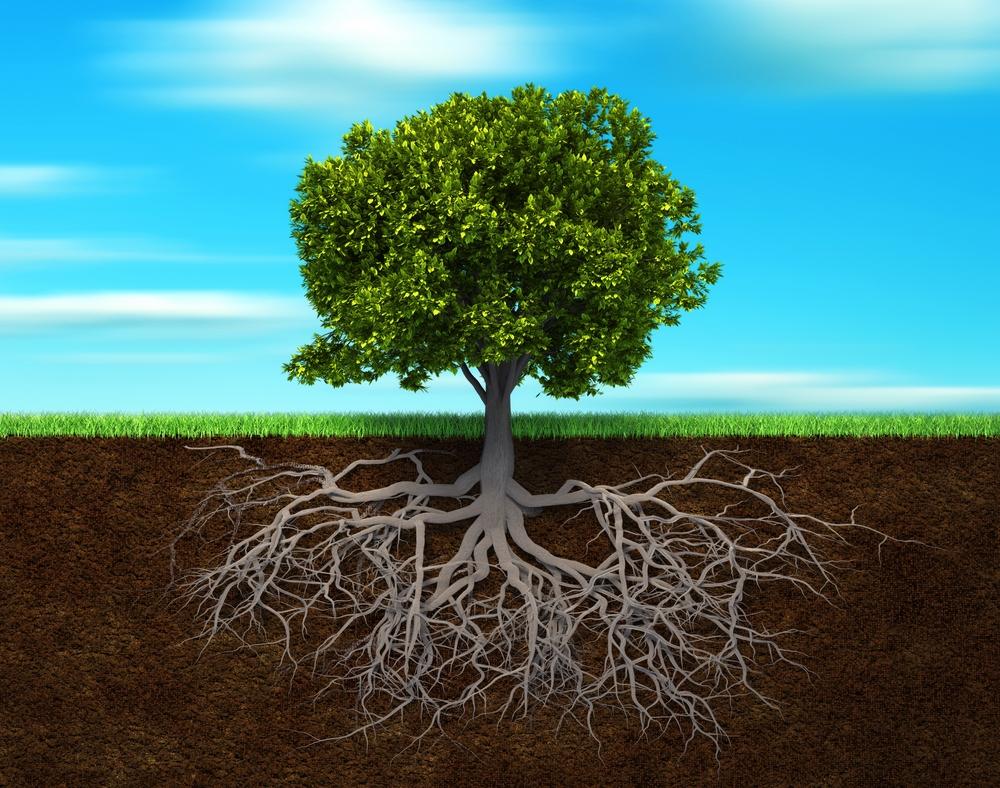 Соотношение подземной и надземной частей растения выросшего в природе.