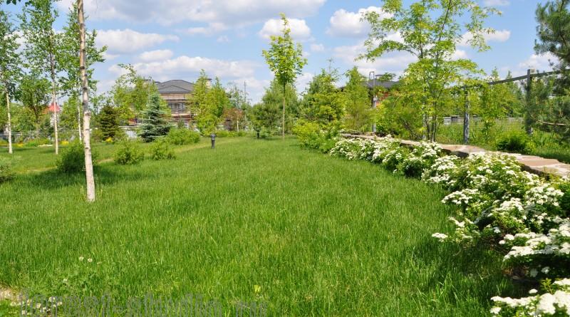 Белый сад с березовой рощей.